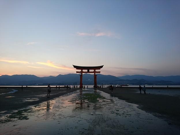 嚴島神社的大鳥居
