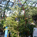 黄金のサナギのXmasツリー