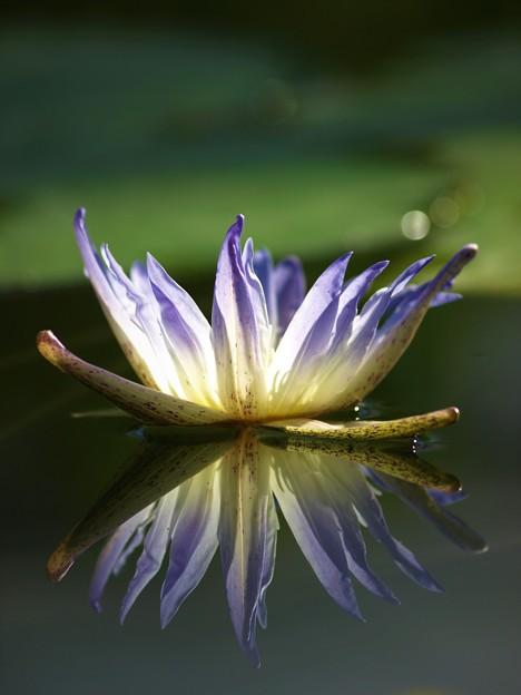 花鳥園の花
