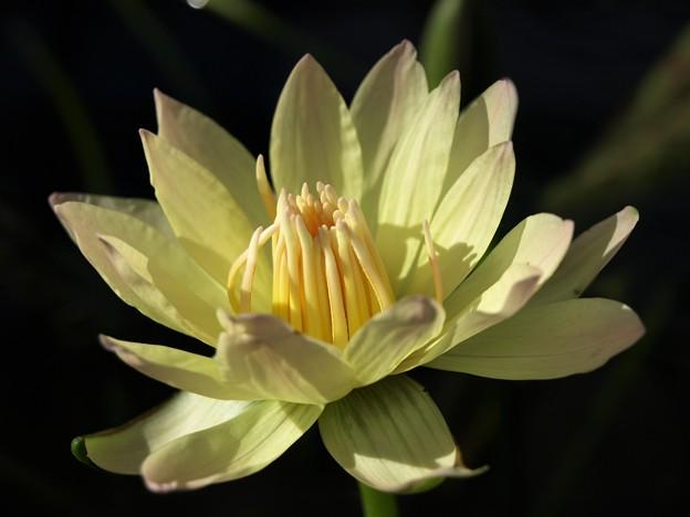 花鳥園の花 白