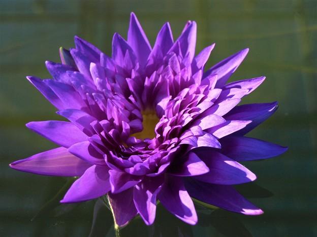 花鳥園の花 紫