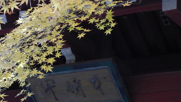 本土寺紅葉