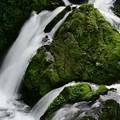 写真: 苔の岩と滝と