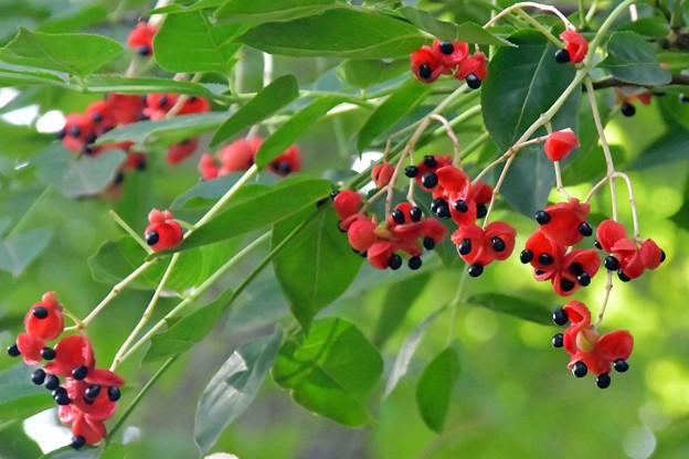 写真: 赤と黒