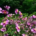 写真: 乱れ咲き~♪