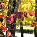写真: 秋色さがし