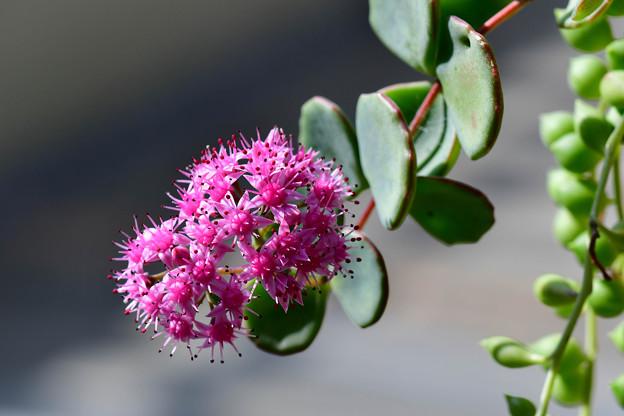写真: 鉢植えの花