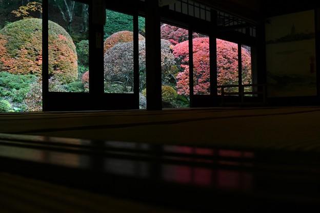 写真: 庭園を眺める