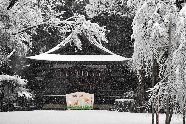写真: 雪ふる神社