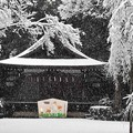写真: 雪ふる神社
