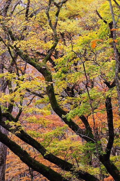 Photos: 秋・彩り1