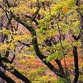 秋・彩り1