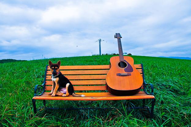 写真: ワンちゅわんとギター。(コラボ、レタッチ)