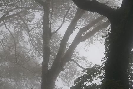 171004八郎坂-弥陀ヶ原、紅葉散策 3