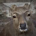 写真: 奈良のイケメン