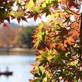写真: 2017昭和記念公園-4