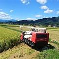 写真: 収穫