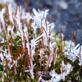 写真: 霜日和