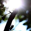 写真: 夏の挽歌