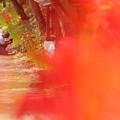 写真: 彼岸花を撮る