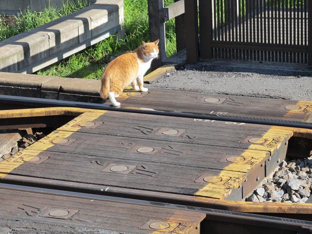 ああっ線路に猫がっ!