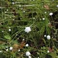 写真: 可愛い花見っけた~~~♪