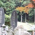 大洞院   森の石松の墓