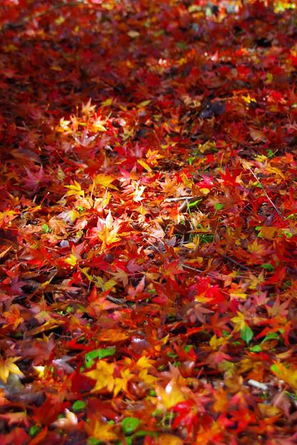 秋色に染まった宝石