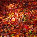 写真: 秋色に染まった宝石