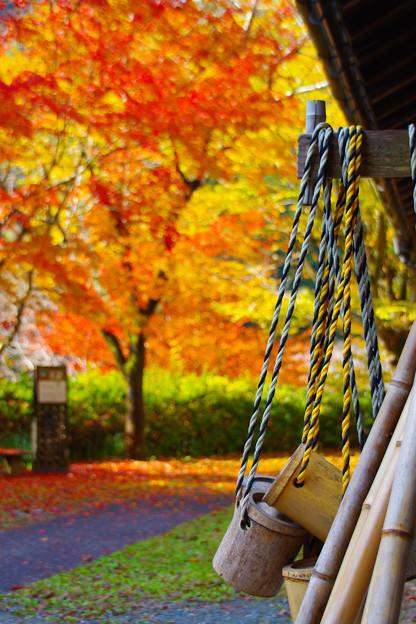 秋色に染まった庭先