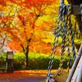 写真: 秋色に染まった庭先
