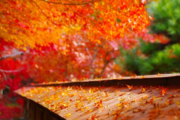 秋色に染まった折り鶴の乱舞