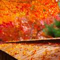 写真: 秋色に染まった折り鶴の乱舞