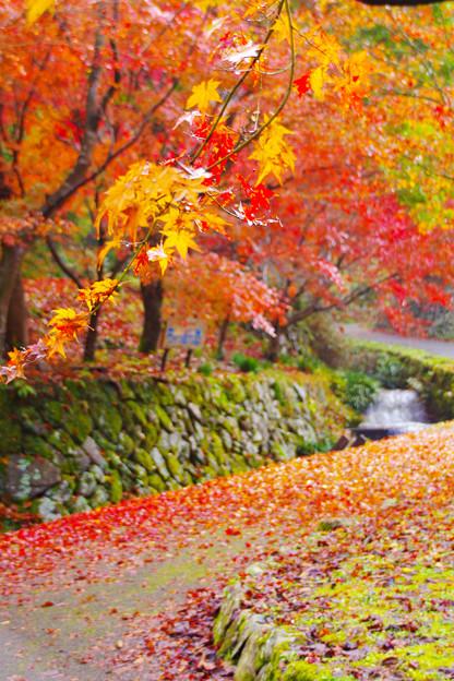 秋色に染まった散歩路