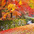 写真: 秋色に染まった散歩路