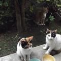 写真: ミニチグ、子ネコ0911