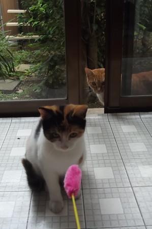 子ネコ&ミニチグ1007