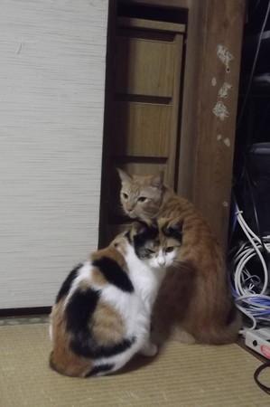 チグ&ミーシャ1027