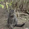 コッヘムのネコ1122
