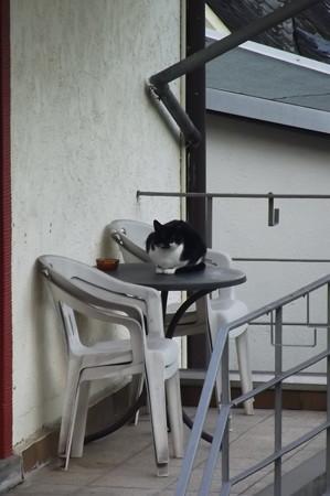 コッヘムのネコ1125