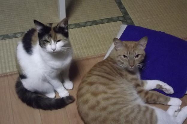 写真: チグ&ミーシャ1215