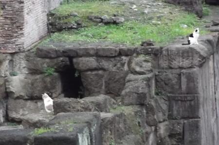 ローマのネコ0118
