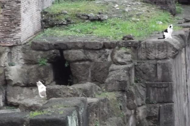 Photos: ローマのネコ0118
