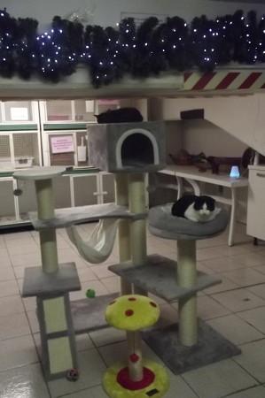 ローマのネコ保護施設0119