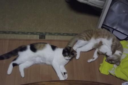 チグ&ミーシャ0122