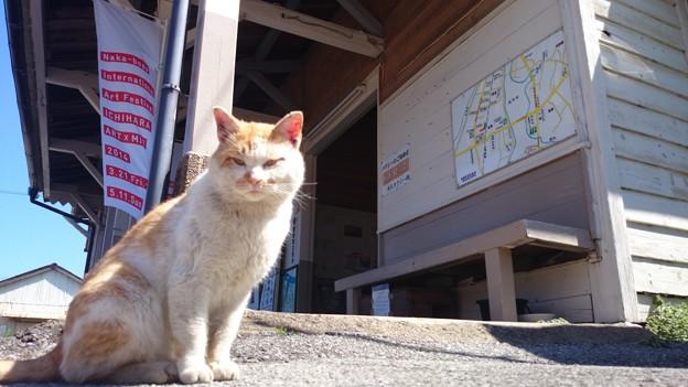 高滝駅い居たネコ